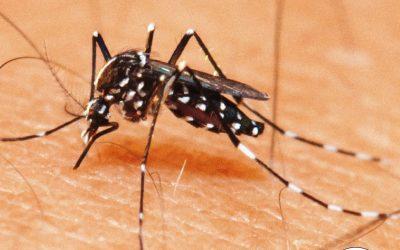 Combate à dengue em condomínios