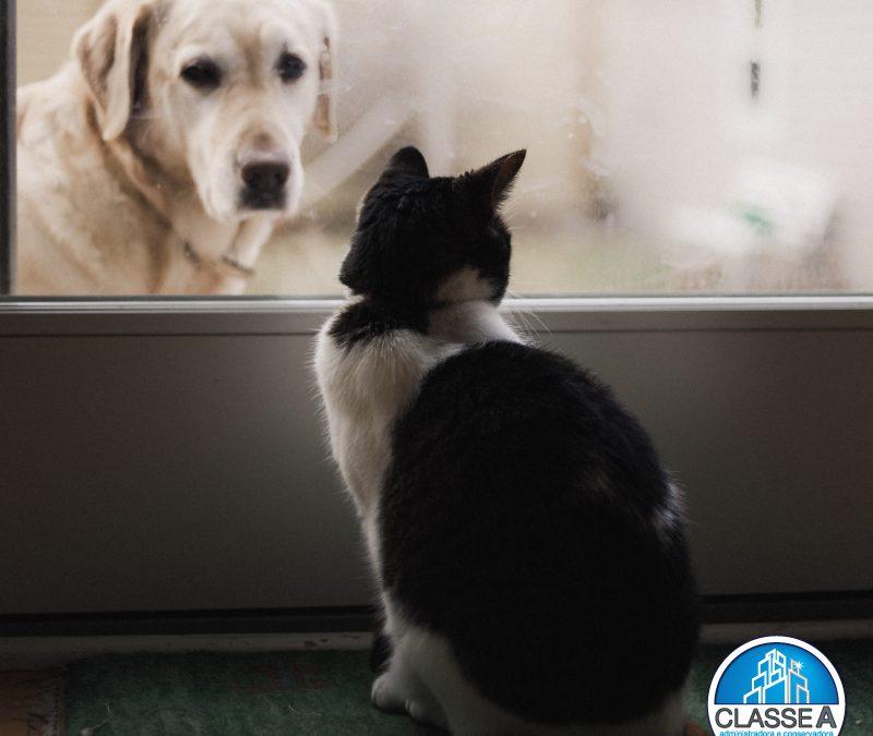 Cuidados com os pets em condomínios em BH