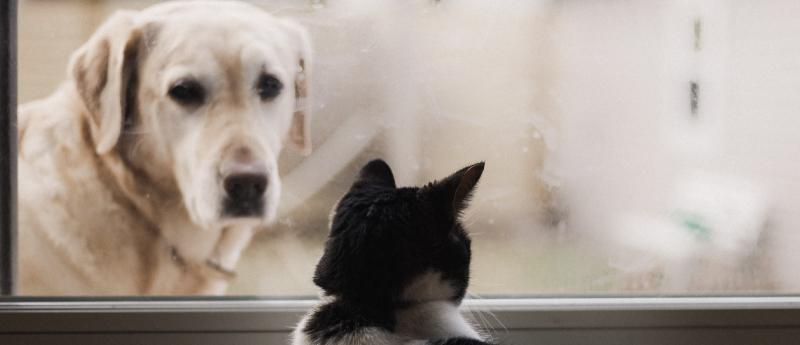 cuidados-com-os-pets-administradora-de-condominios-em-Bh-administradoras-de-condominios-em-Bh
