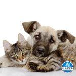 animais-em-condominios-administradora-de-condominios-BH