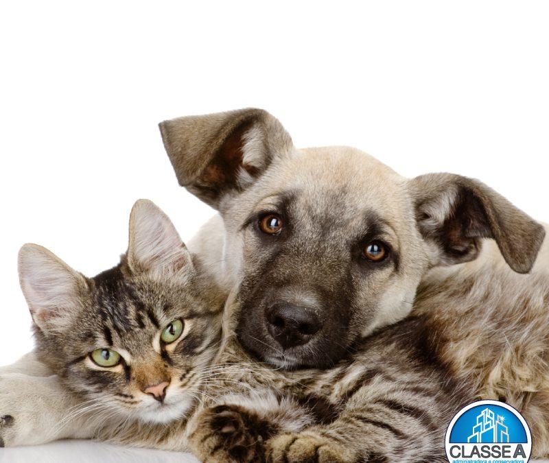 Animais em condomínios – Administradora de condomínios BH